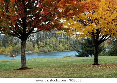 Herbst Maples