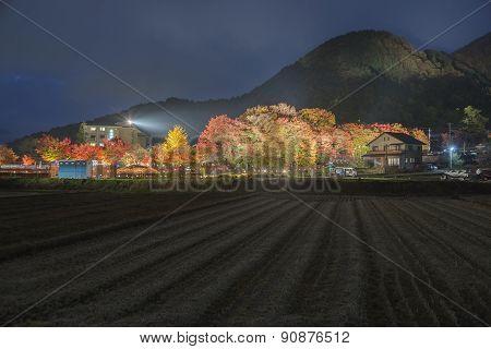 Maple Corridor At Nashigawa River, Japan