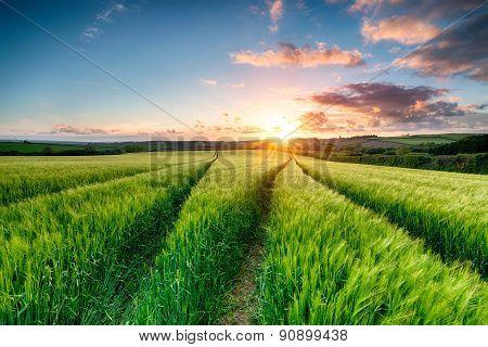 Cornish Sunset Over Farmland