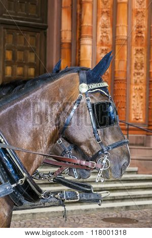head of stagecoach horses in detail waiting in front of church poster
