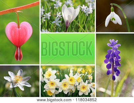 Collage Of Spring Flowers With Copy Space