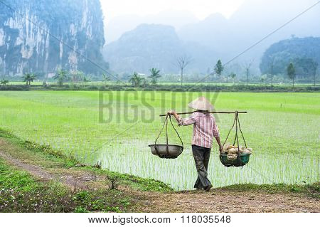 Vietnamese Farmer Works At Rice Field. Ninh Binh, Vietnam