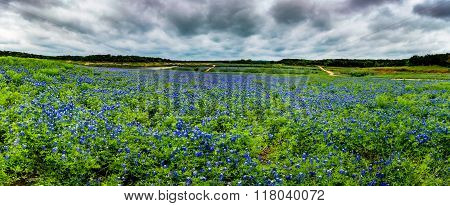 High Res Panorama Of Mule Shoe Bend, Texas.