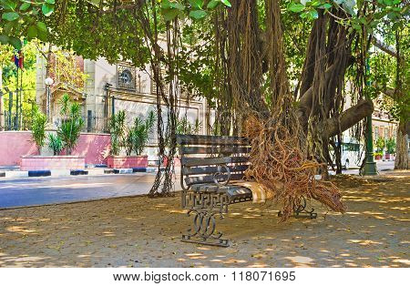 The Banyan Tree On Nile Corniche