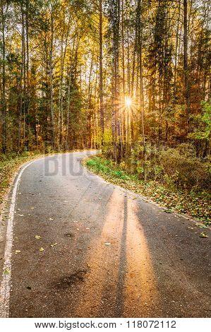 Winding asphalt road path walkway through autumn forest. Sunset