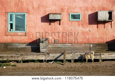 Dog And Cat At Residential Building At Chukotka