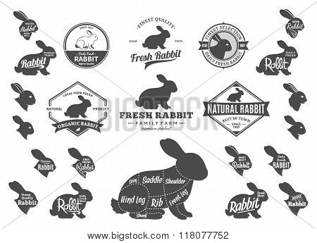 Vector Rabbit Logo, Icons, Charts And Design Elements