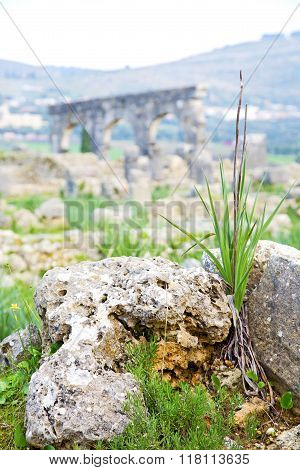 Volubilis In Morocco  The Old Roman   Monument And Site