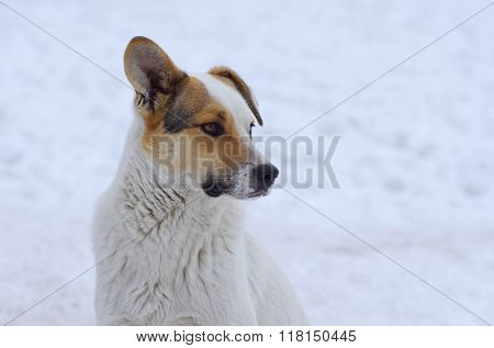 Portrait of mixed breed flap-eared dog