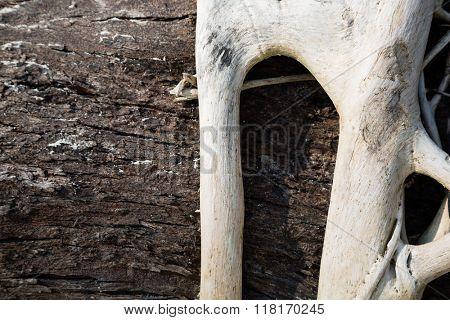 Freakish roots of a tree outdoors, sea coast.
