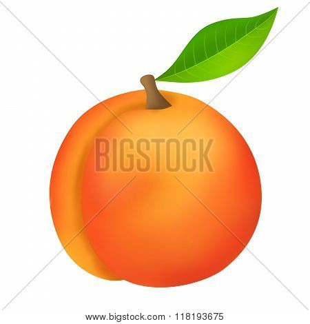 Peach yellow red fruit isolated illustration vector