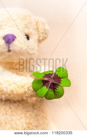 Green and red colored lucky clover leaf at the hand of a teddy bear in background (copy space)