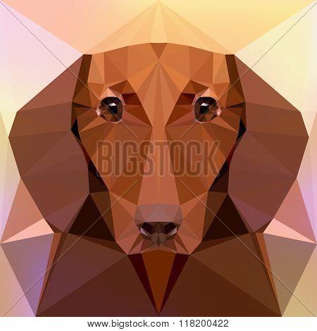 Face of a dachshund dog