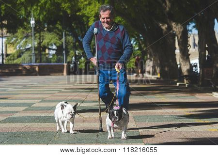 Elderly man with crutch walking his dogs. Summersunny.