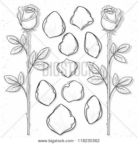 Isolated rose and petals handmade in sketch style. Sketch flower