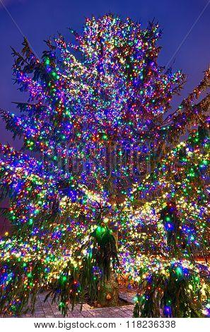Christmas Tree Near Panther Stadium In Charlotte North Carolina