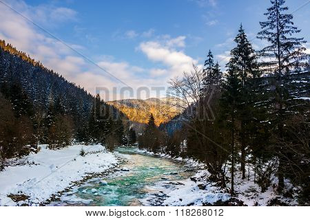 Frozen River In Forest