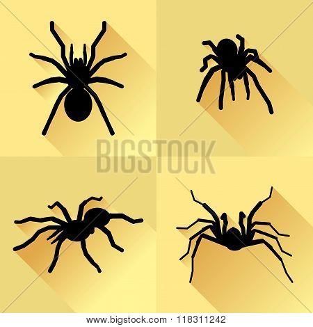 Vector Long Shadow Black Silhouette Spider Tarantola Set