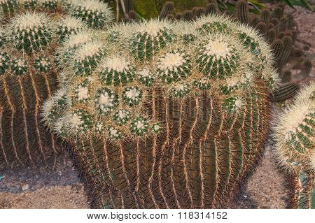 Different Green Cactus