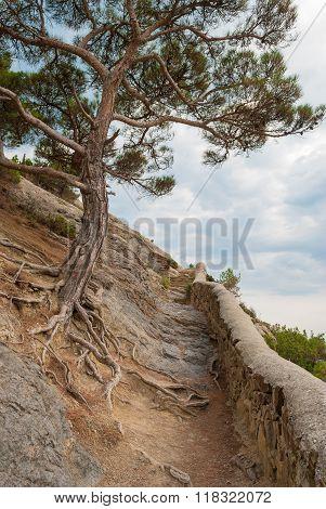 Tree On Mountainside