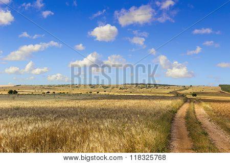 SUMMER.Alta Murgia Nationa Park: field of wheat. - (Apulia) ITALY-