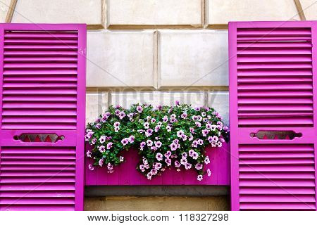 Pink Shutters And Petunia Flowers On A Wall