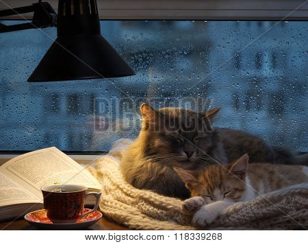 Cats sleeping in the window