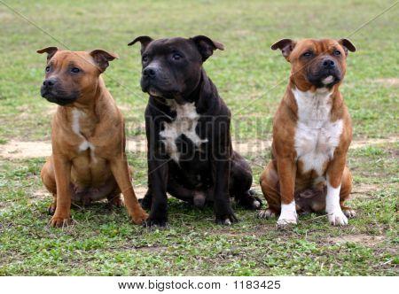Three Staffordshire