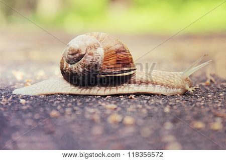Slow mollusk snail traveling on the road poster