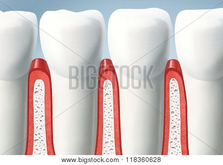 Detail of healthy teeth and gums in dentistry