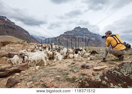 Animal Nature photographer in Himalayas mountains. Spiti valley, Himachal Pradesh, India