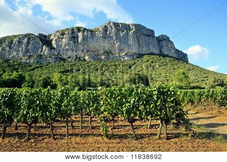 Hortus mountain seen from vineyard