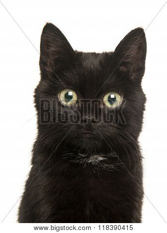 Cute black kitten cat portrait