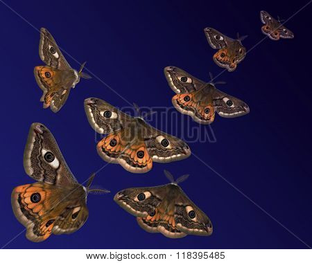 Moths (saturnia Pavoniella) Flying In The Night