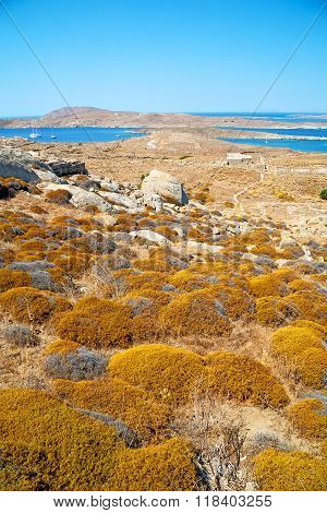 Sea In Delos Greece The Historycal Acropolis And Old Ruin Site