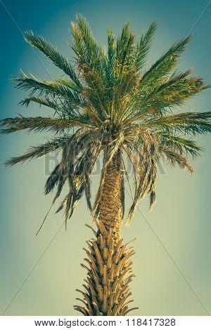 Palm Tree In Erg Chebbi, At The Western Edge Of The Sahara Desert