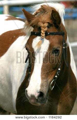 poster of nice portrait of a little beautiful pony