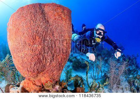 SCUBA diver and large sponge