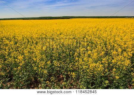 View Of Countryside With Rapeseed Field Ploughed Field Forest