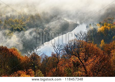 Colorful Forest Hills Covered With Mist In Autumn. Sigulda, Latvia.
