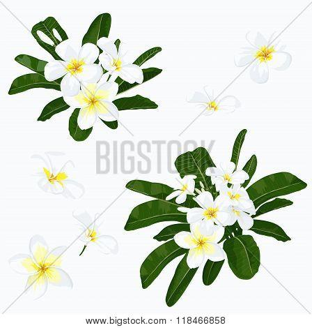Plumeria flower set
