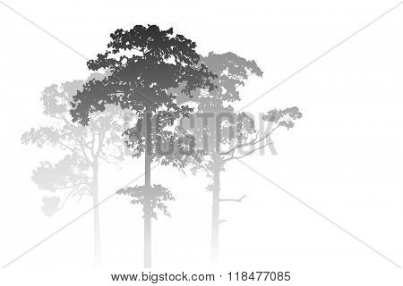 A White Misty Forest Landscape with Trees