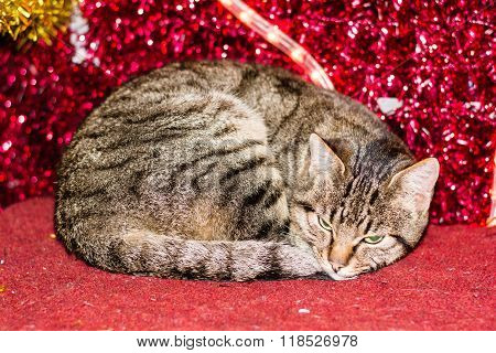 Christmas kitten with red christmas light decoration