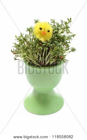 Yellow Easter Chicken On Green Watercress In Green Cup