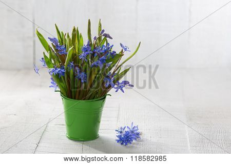Bouquet of wood squill (Scilla siberica) flowers in  green pail against a old wooden plank. Shallow DOF. Selective focus.