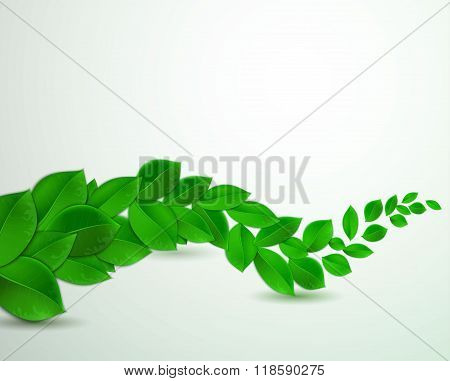 green leaves on a white background