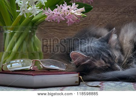 Cat, flowers, book and glasses