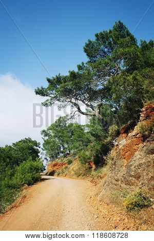Country Road. Pine-trees And Blue Sea. Aged Photo.