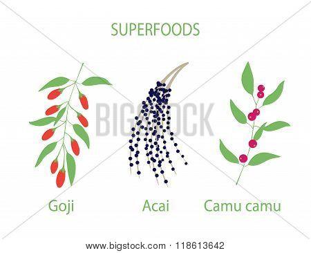 Illustration of camu camu, goji and acai