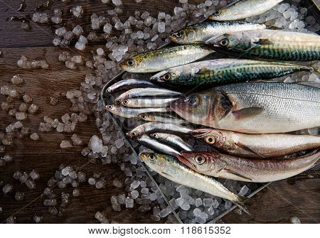 Fresh fishes mix hake sea bass sardine mackerel anchovies on ice and wood
